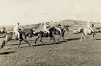 Eltham Polocrosse in action ~1962