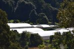 Hydroponics Farm