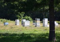 Apiculture - mainly limited to Plantations